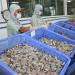 Gia tăng cạnh tranh các mặt hàng nông, lâm, thủy sản