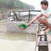 Nâng cao hiệu quả nuôi cá vùng lòng hồ