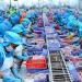 Vì sao thủy sản khó cạnh tranh tại Hàn Quốc