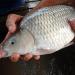 Đột phá nuôi trồng thủy sản phía Bắc