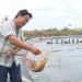 Cà Mau: Người nuôi tôm cần bình tĩnh khi thu hoạch tôm