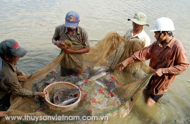 Chuỗi cung ứng thủy sản được phổ biến đảm bảo an toàn thực phẩm