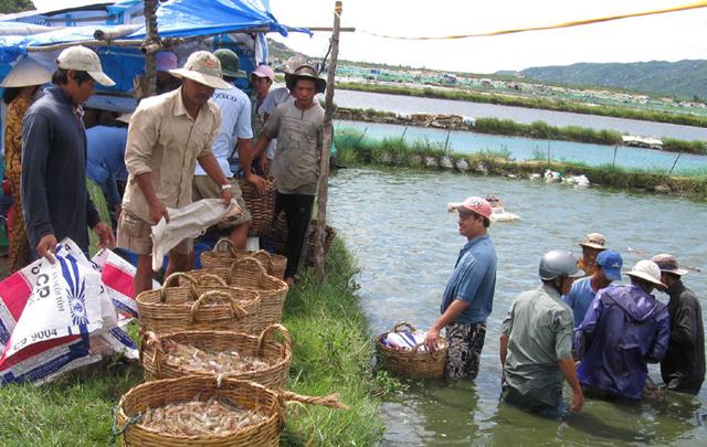Định dạng lại thủy sản đồng bằng sông cửu long
