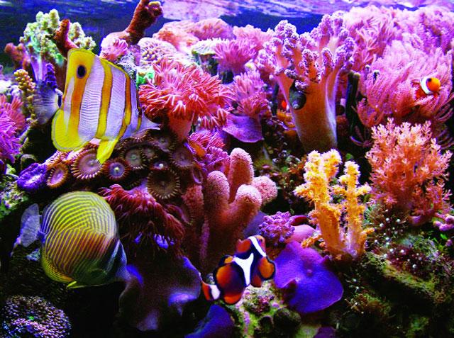 Kết quả hình ảnh cho san hô