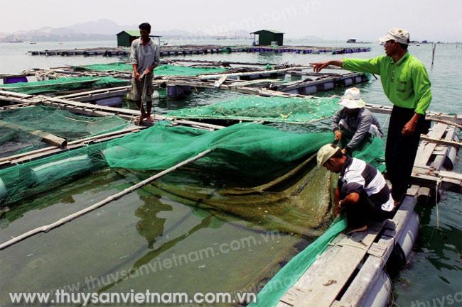 Cá chết tại nhiều địa phương ảnh hưởng đến đời sống người dân - Ảnh: Nguyễn Thi