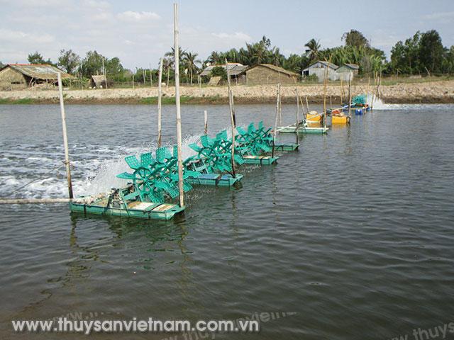 Ao nuôi tôm sú của một hộ dân ở xã Mỹ Long Nam