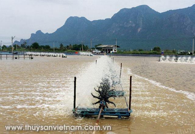 Ao nuôi tôm theo công nghệ Aquamimicry tại Thái Lan