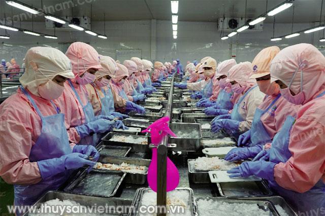 Chế biến tôm tại nhà máy của Tập đoàn Thủy sản Minh Phú