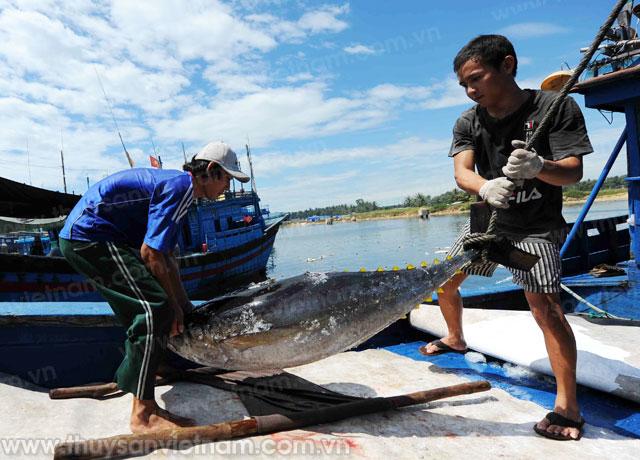 tàu cá bình định tăng tốc khai thác cá ngừ
