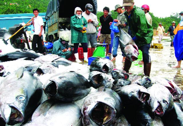 Phú Yên: Ưu tiên nghề câu cá ngừ đại dương