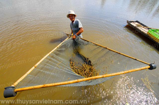 Cộng đồng chung tay bảo vệ nguồn lợi thủy sản