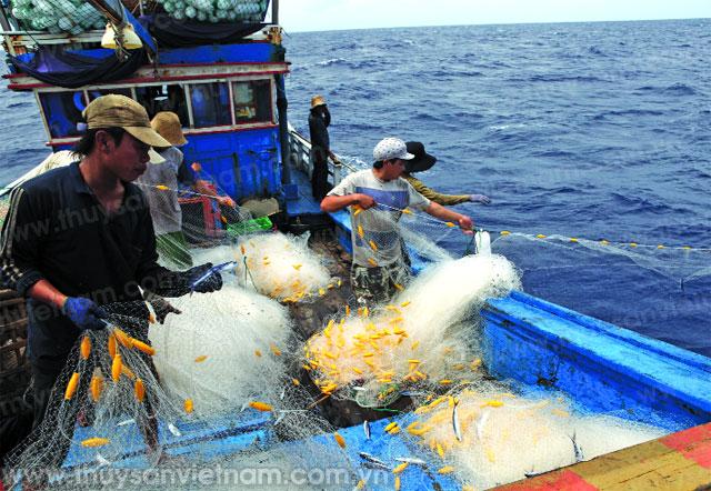Ngư dân huyện Bình Sơn đã khai thác gần 29.500 tấn hải sản các loại