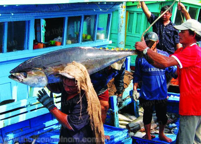 Triển khai xây dựng nhãn hiệu Cá ngừ đại dương Bình Định