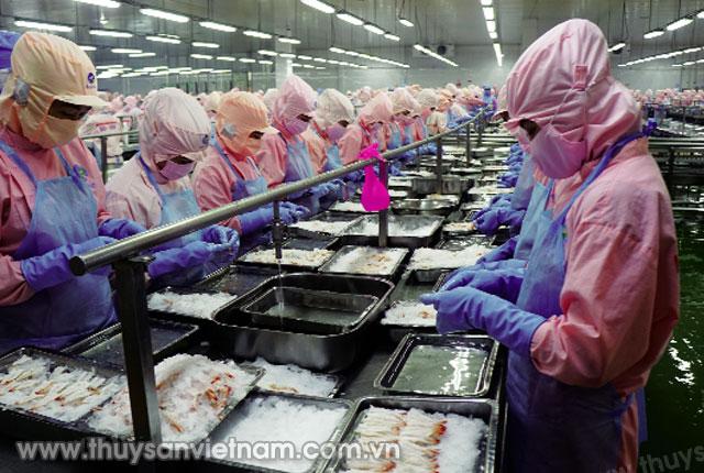 6 tháng, xuất khẩu tôm đạt 1,6 tỷ USD   Ảnh: Nguyệt Nga
