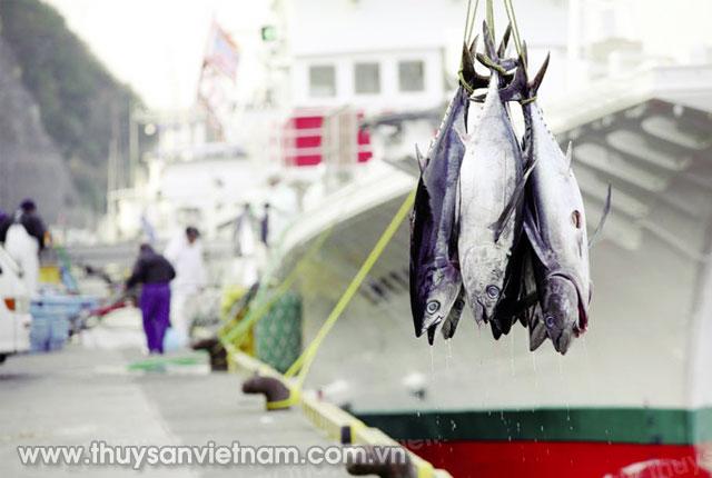 Sản phẩm cá ngừ khai thác hướng đến chứng nhận MSC   Ảnh: ST