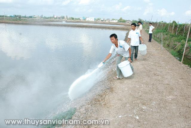 Sử dụng vôi bột rải xung quanh bờ ao để ổn định môi trường ao nuôi  Ảnh: PTC