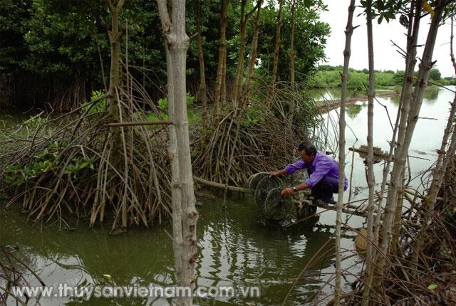 Nuôi tôm - rùng giúp bảo vệ môi trường sinh thái Ảnh: Thanh Nhã
