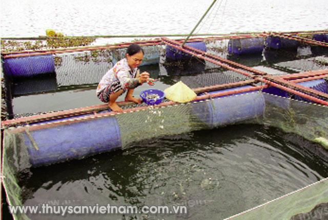 Hà Tĩnh: Phát triển nghề nuôi cá lồng bè trên sông