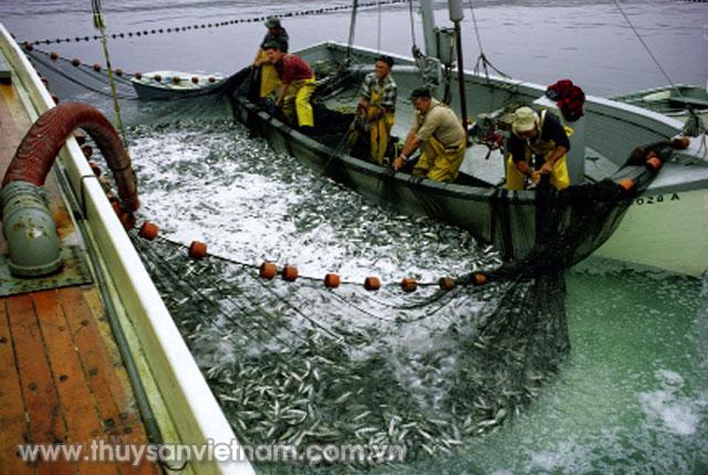 Ngư dân Maine khai thác thủy sản     Ảnh: National Geographic