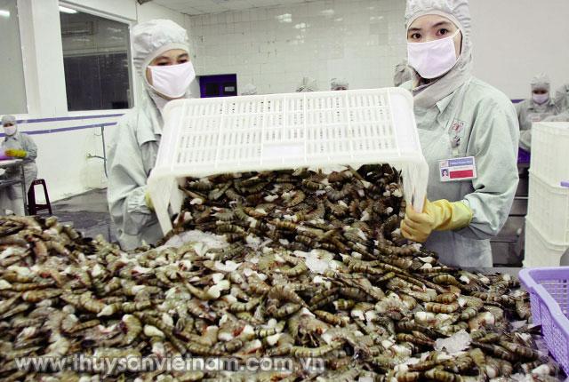 Cần kiểm soát tốt hoạt động nhập khẩu tôm   Ảnh: Trần Huy