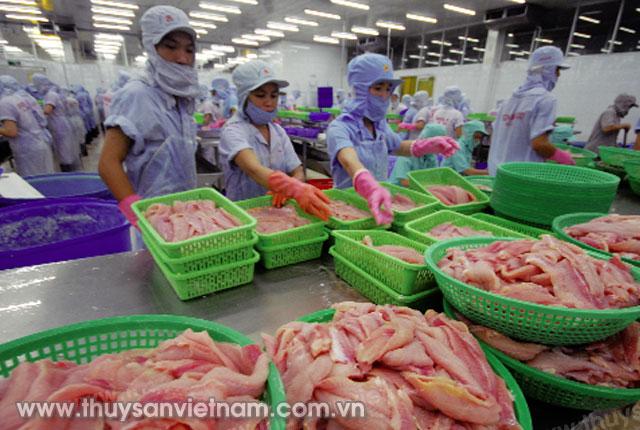 Cá tra là sản phẩm xuất khẩu chủ lực của thủy sản Việt Nam   Ảnh: Lê Hoàng Vũ