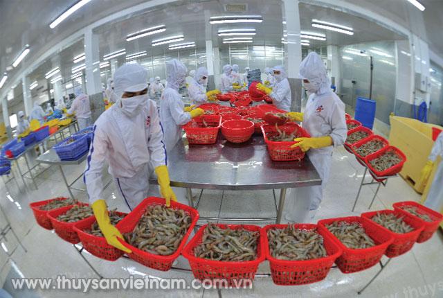 Tôm là đối tượng xuất khẩu chủ lực của ngành thủy sản Ảnh: Thanh Cường