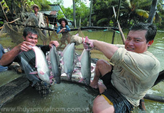 nuôi trồng thủy sản cần nhiều nỗ lực đổi mới