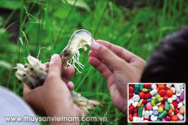 Sử dụng đúng cách thuốc và chế phẩm sinh học: Phần I: Sử dụng đúng kháng sinh