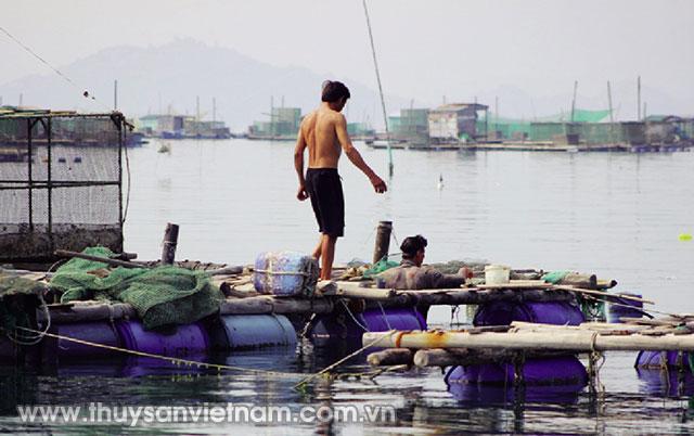 Ngư dân chăm sóc tôm hùm ở các lồng bè   Ảnh:QuangĐức