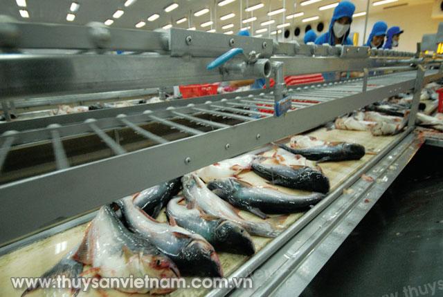 Dây chuyền công nghệ hiện đại trong chế biến cá tra   Ảnh: Ngọc Trinh