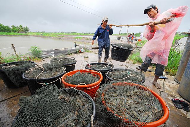 http://thuysanvietnam.com.vn/uploads/article2/baiviet/nuoitrong/chuyengiaocntom02.jpg