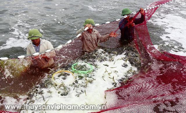 Đào tạo 500 lao động trong ngành nuôi trồng thủy sản cho các tỉnh ĐBSCL
