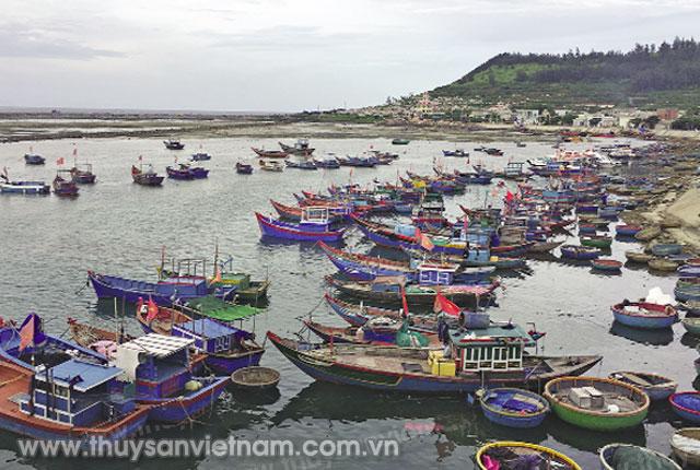 Tàu thuyền đánh cá ở Lý Sơn Ảnh: SN