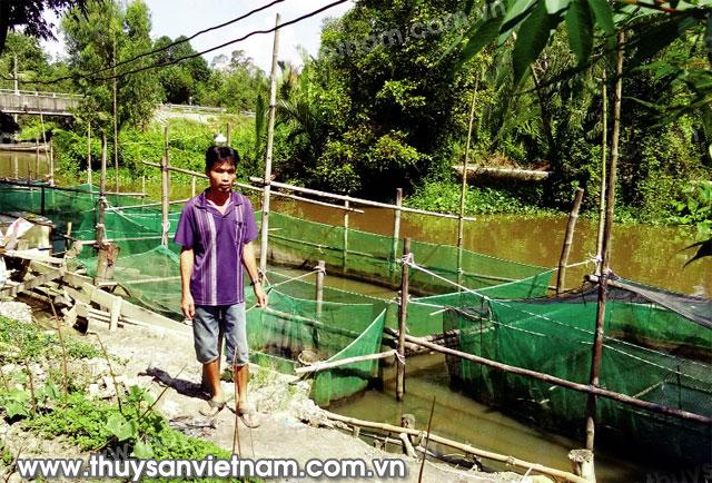 Anh Nguyễn Văn Lâm bên bèo nuôi cá