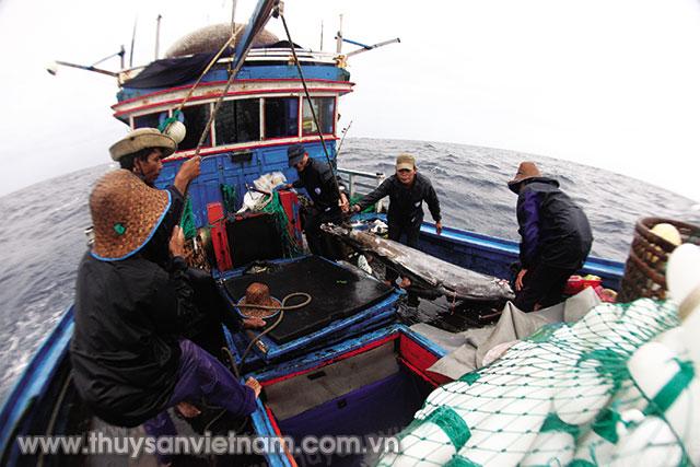 Triển khai thực hiện chính sách đóng mới tàu cá cho ngư dân