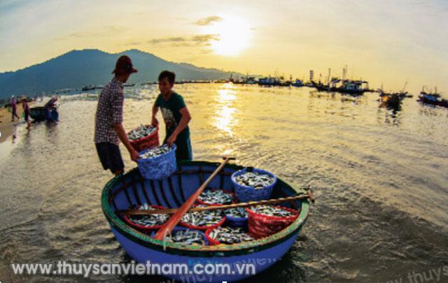 Những bụng thúng đầy ắp tôm cá mang theo bao vui buồn ngư dân   Ảnh Lê Tuấn