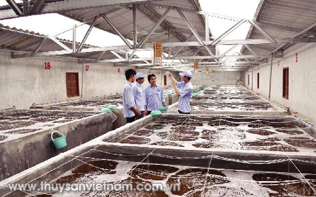 Tôm giống là yếu tố quan trọng khi phát triển ngành tôm   Ảnh: Phan Thanh Cường