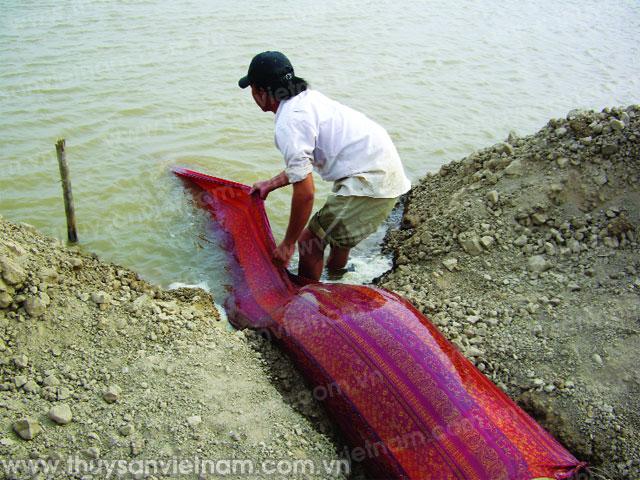 Lưu ý khi chuẩn bị ao nuôi và thả giống tôm biển