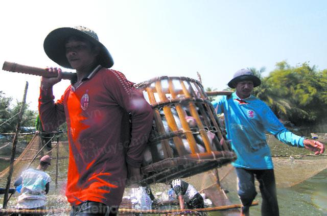 Nuôi cá tra công nghiệp lợi nhuận gần 1 tỷ đồng mỗi năm