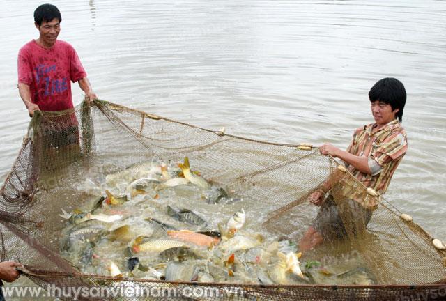 Sản lượng khai thác thủy sản ước đạt 389 nghìn tấn
