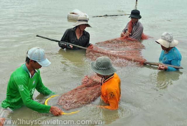 Kim ngạch xuất khẩu tôm luôn dẫn đầu so với các mặt hàng thủy sản khác