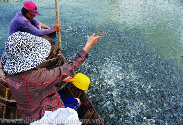 Tạo điều kiện cho các cơ sở sản xuất giống cá tra trên địa bàn tỉnh