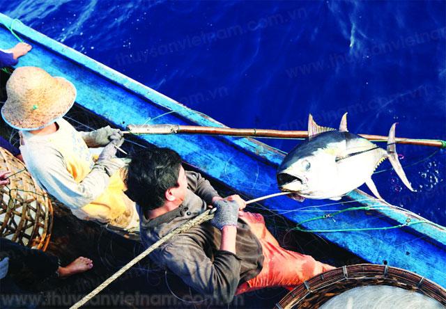 Cá ngừ là mặt hàng thủy sản xuất khẩu chủ lực của Việt Nam