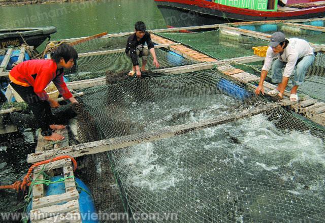 nuôi thủy sản cát hải