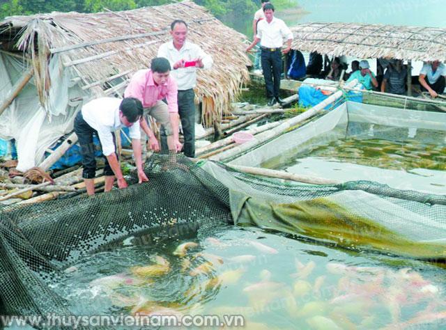 Giá cá nước ngọt bắt đầu tăng dần