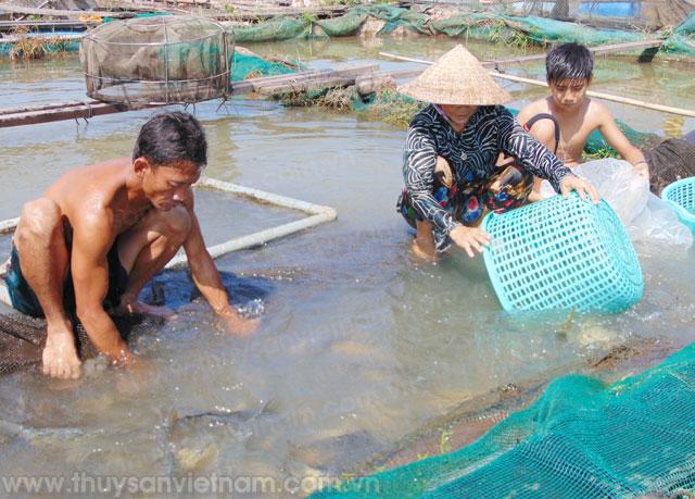 Thực hiện mô hình khai thác và chế biến thủy sản