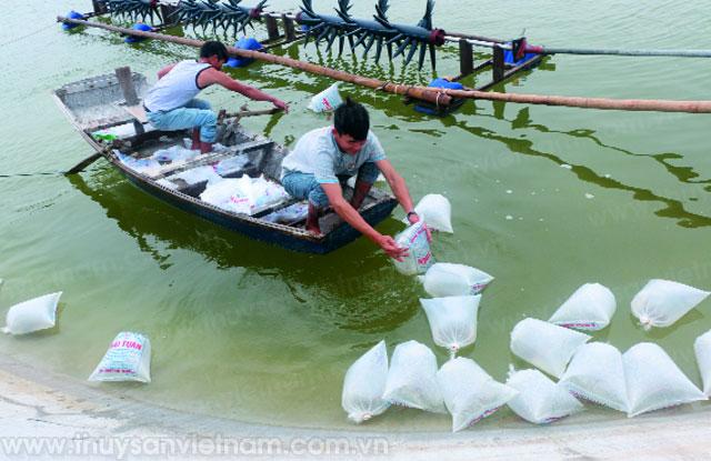 Phát huy lợi thế nuôi tôm vụ đông tại Hà Tĩnh