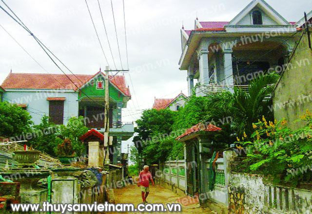 [Hình: z300-Thuy-san-Viet-Nam1531-.jpg]
