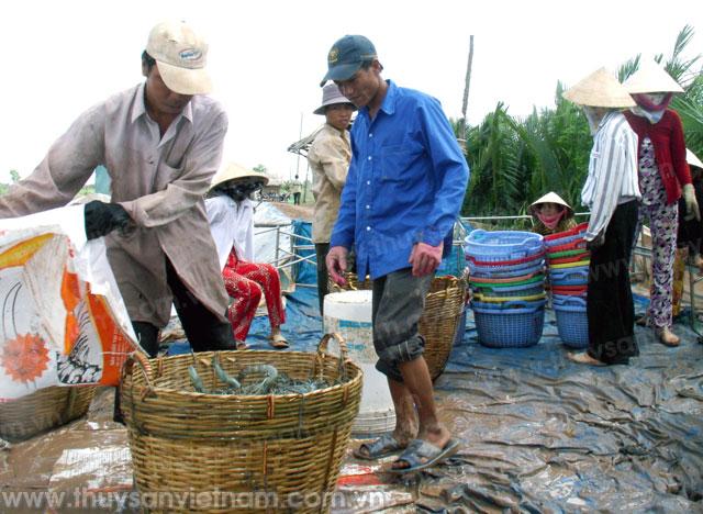 http://thuysanvietnam.com.vn/uploads/article2/baiviet/thuongmai/web1295-.jpg