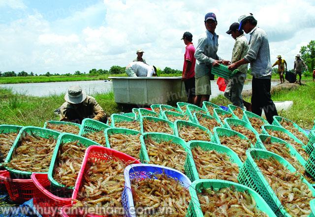 http://thuysanvietnam.com.vn/uploads/article2/baiviet/thuongmai/z300-Thuy-san-Viet-Nam4082-.jpg